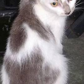 Trudy Brodkin Storace -          Sweetie Kitten