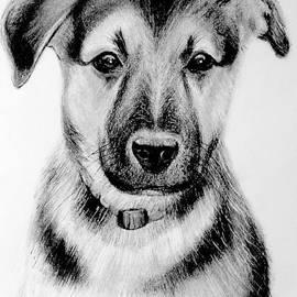 Alan Armstrong - # 1 German Shepherd puppy