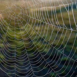 Dave Byrne -  A Web of intrigue