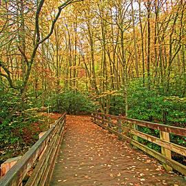 HH Photography of Florida -  Autumn Woods