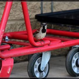 R A W M   -           Pretty Bird