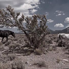 Bjorn Burton -  Black and White