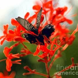 Kathleen Struckle -  Butterfly Dance