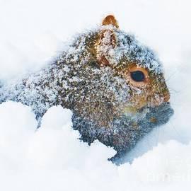 Judy Via-Wolff -  Deep Snow Squirrel