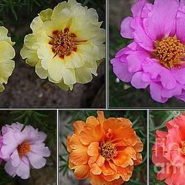 Photographic Art and Design by Dora Sofia Caputo -  Desert Roses Delight