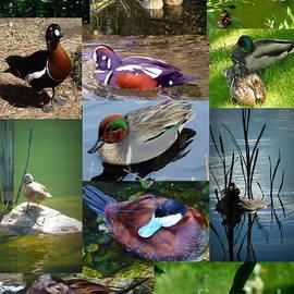 Susan Garren -  Ducks Collage
