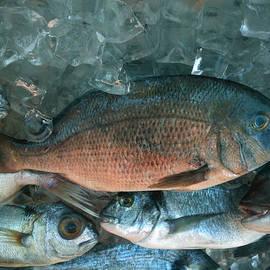 Colette V Hera  Guggenheim  -  Fresh Dorado fish Santorini Greece