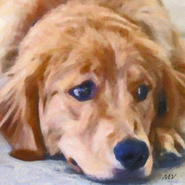 Maggie Vlazny -  Golden Retriever Dog