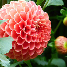 Sumedha Barna -  New Blooms