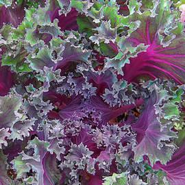Dennis Dugan -  Ornamental Kale
