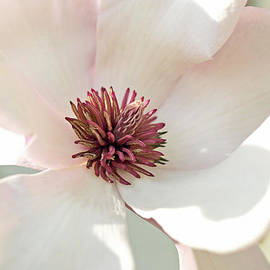 Cheri Randolph -  Promised Spring