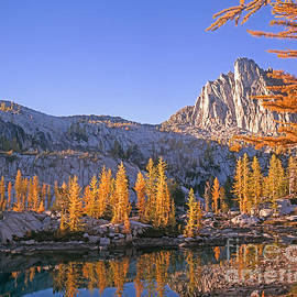 Tracy Knauer -  Prusik Peak behind Larch trees