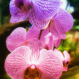 Elaine Manley -  Rainbow Orchids