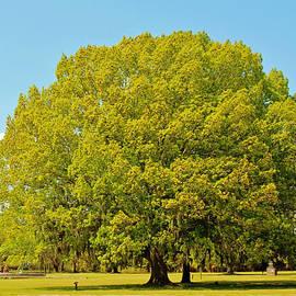 Cynthia Guinn -  Round Tree