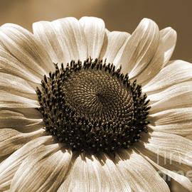 Chris Scroggins -  Sunflower