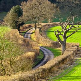 Tony Murtagh -  Winding Country Lane