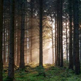 David Tinsley -  Winter Sunbeams