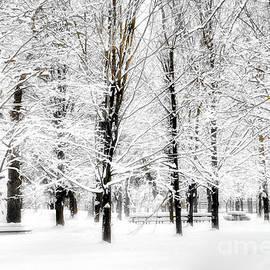 Elaine Manley -  Winters Snowy Glow