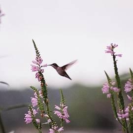 Robin Lee Mccarthy Photography - #031 Hummingbird Film Original Horizontal