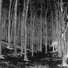 Clive Beake - 100 ACRE wood