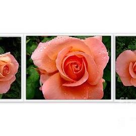 Mika Iwakiri - 3 Photos Series orange roses
