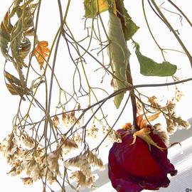 Sue Rosen - A Rose