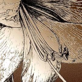 J McCombie - Amaryllis