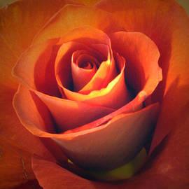 Amber Nissen - Amber Rose