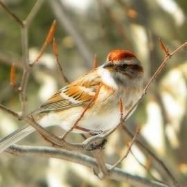 Bonita S Sylor  - An American Tree Sparrow