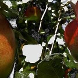 Klaas Hartz - Apfelkuchen