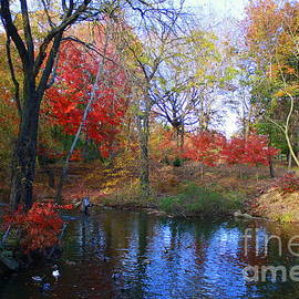 Photographic Art and Design by Dora Sofia Caputo - Autumn by the Creek