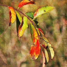 Judi Bagwell - Autumn Leaves