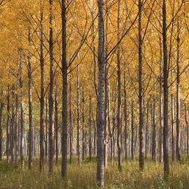 Zeljko Dozet - Autumn Verticals