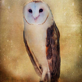 Barbara Manis - Barn Owl