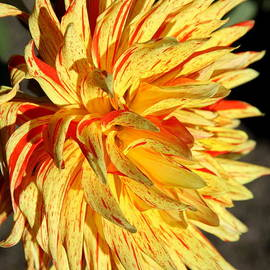 Christiane Schulze Art And Photography - Beauty In The Sun