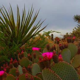 James Welch - Beauty Of The Living Desert