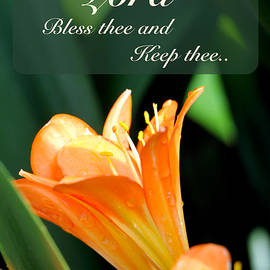 Debbie Nobile - Blessings