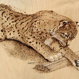 Ron Haist - Bobcat