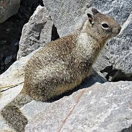 Emily  Froese - California Ground Squirrel