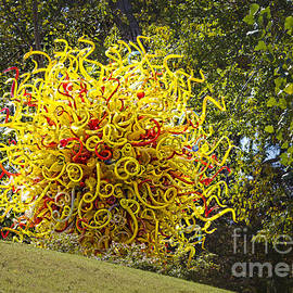 Elena Nosyreva - Chihuly in the park