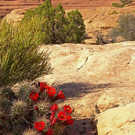 Duncan Mackie - Claret Cup and Delicate Arch