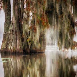Cathy Smart - Colors of the Swamp