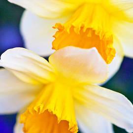 Roselynne Broussard - Daffodils