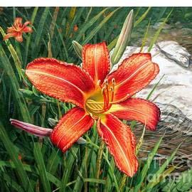 Bob  George - Day Lily