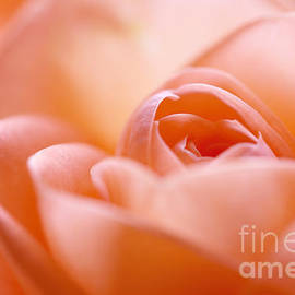 LHJB Photography - Delicate Rose