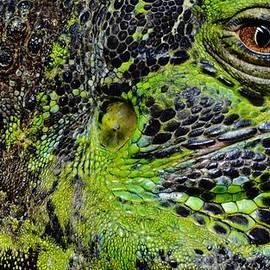 Werner Lehmann - Details Iguana