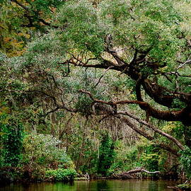 Cyndi Lenz - Dora Canal Tavares Florida