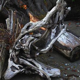 Tom Janca - Driftwood On The Beach