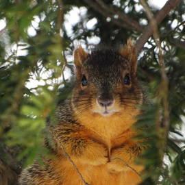 Dennis Pintoski - Eastern Fox Squirrel