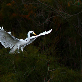 Ed  Cheremet - Egret
